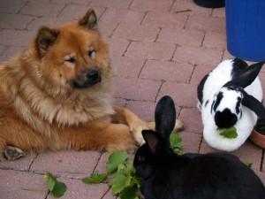 kaninchen und hunde