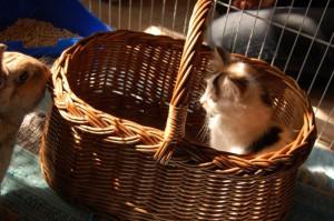 kaninchen und katzen