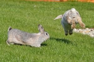 kaninchen-urin-zusammenfuehrung
