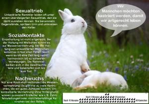 kaninchen-verhütung