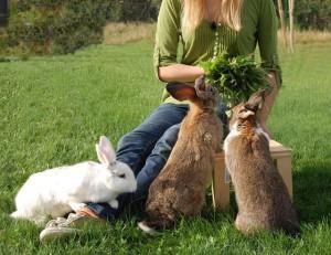 kaninchen-vertrauen