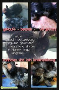 kaninchen-verwahrlost-zoohandel