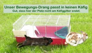 kaninchen wie viel platz