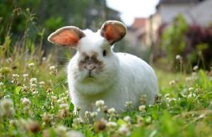 kaninchen-wiesenkraeuter