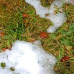 kaninchen-winter
