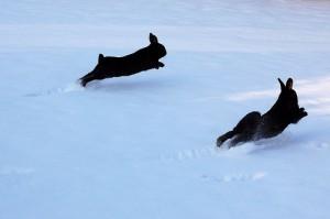 kaninchen winter freilauf