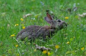 kaninchen wissen was giftig ist