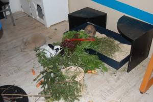 kaninchen wohnung ernährung