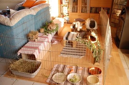 kaninchen wohnzimmer kaninchenwiese. Black Bedroom Furniture Sets. Home Design Ideas