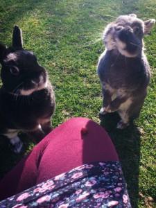 kaninchen zahm