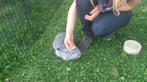 kaninchen zahm streicheln