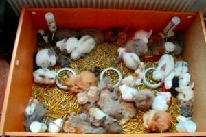 kaninchen-zoohandel