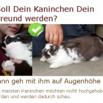 Kaninchen zähmen