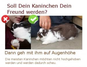 kaninchen zutraulich