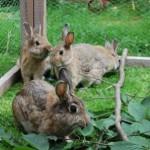 kaninchen-zweige