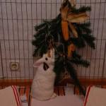 kaninchen-zweige-beschäftigung
