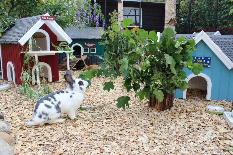 Buddelkisten Fur Kaninchen Haltung Pflege Verhalten