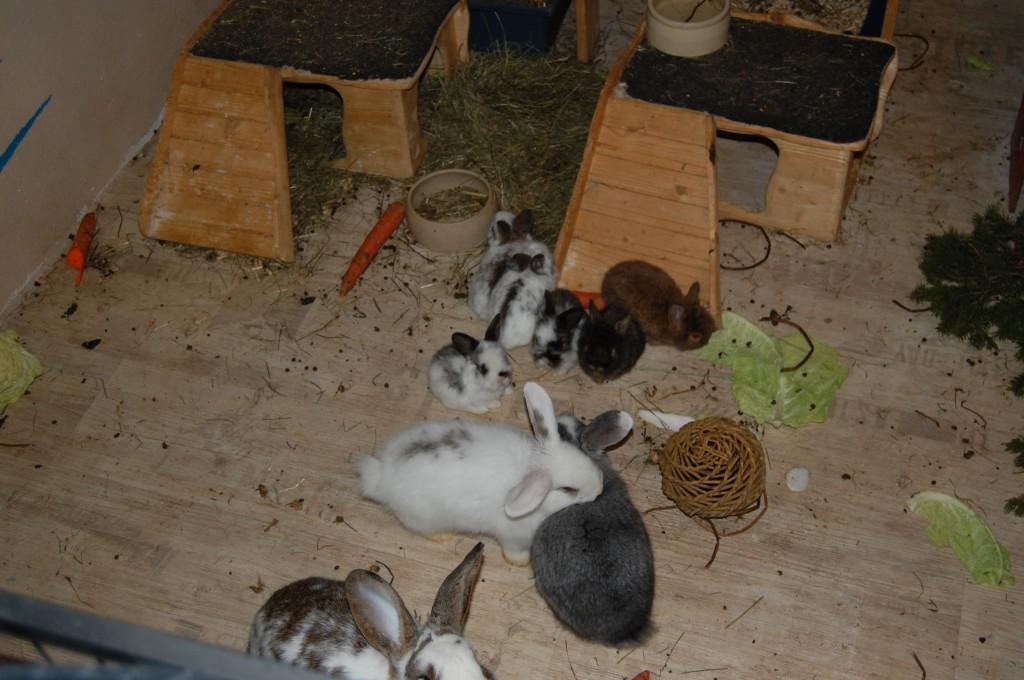 kaninchenbabys 22 tage