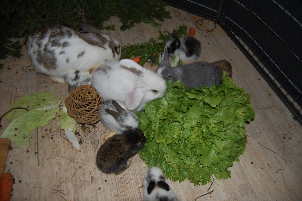 kaninchenbabys 23 tage