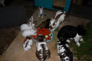 kaninchenbabys gruppenhaltung