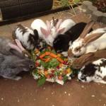 kaninchenbabys in der gruppe