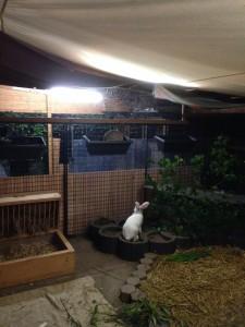 kaninchenbabys spielen