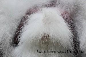 kaninchenbockhoden