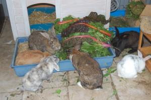 Mash für Kaninchen