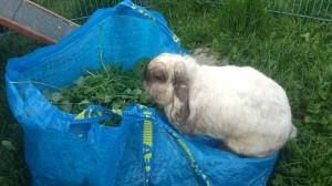 kaninchenfütterung wiese