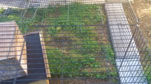 kaninchengehege-einfach (3)