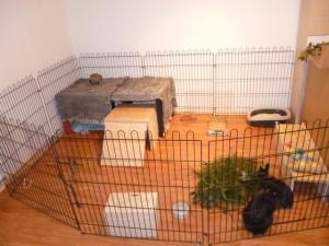 kaninchengehege-nachwuchs