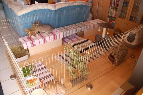 Wohnungsgehege bauen - Kaninchenstall einrichten ...