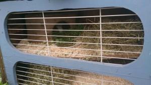 kaninchengitter käfig
