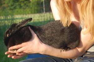 kaninchengriffarm