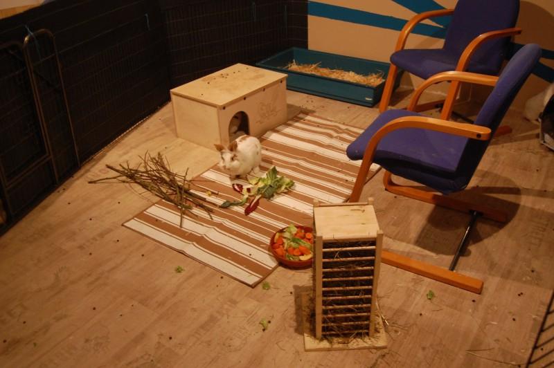 Einrichtung - Kaninchenstall einrichten ...