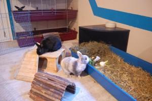 kaninchenhaus2