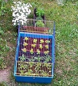 kaninchenkäfig-pflanzenschutz
