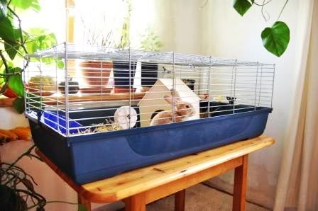 die f nf schlimmsten fehler die man als kaninchenhalter machen kann haltung pflege. Black Bedroom Furniture Sets. Home Design Ideas