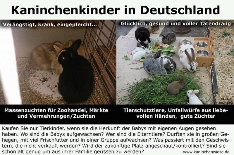 kaninchenkinder-deutschland