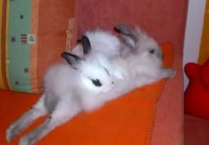 kaninchenkuschelnmickey