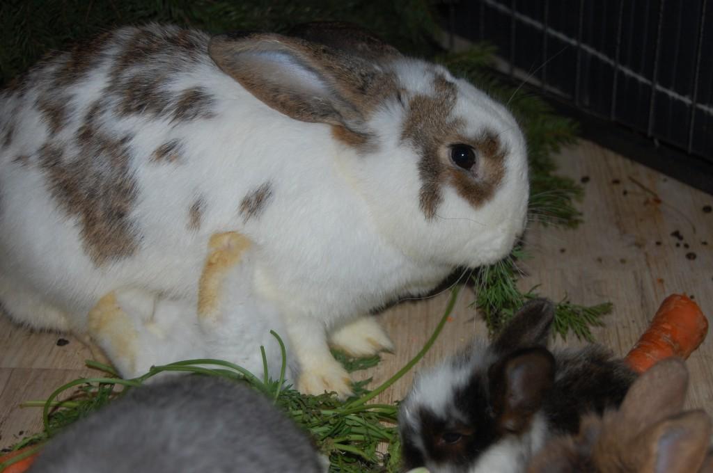 kaninchenmama säugt