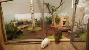 kaninchenparadies