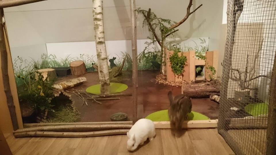kaninchen mbel gallery of das kaninchen putzt sich with kaninchen mbel fr with kaninchen mbel. Black Bedroom Furniture Sets. Home Design Ideas