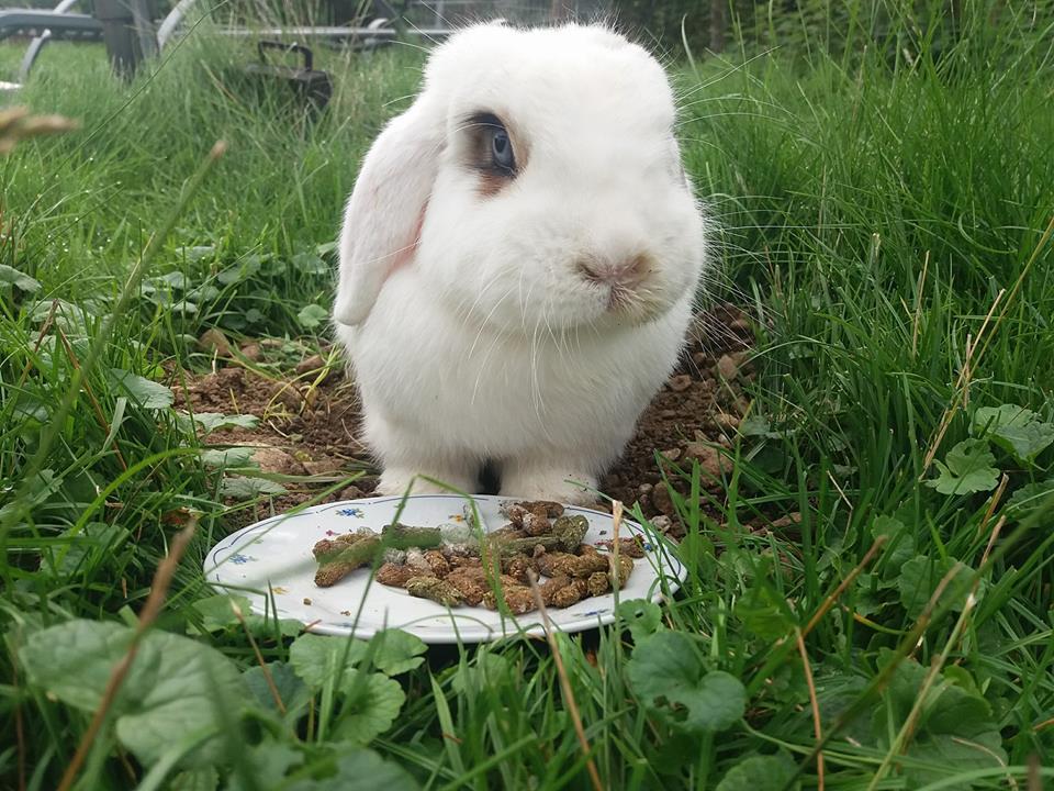 panacur kaninchen