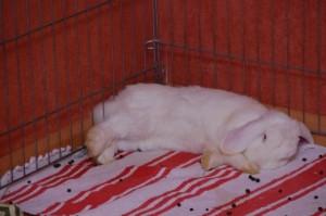 kaninchenstubenrein