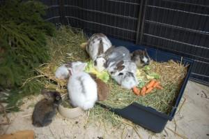 kaninchentoilette kaninchenbabys