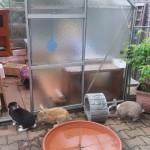 kaninchenvoliere gewächshaus