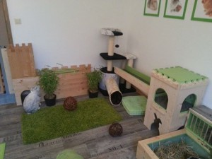kaninchenzimmer2