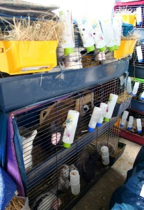 kaninchenzoohandlungzucht
