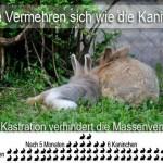 Geschlechtsbestimmung Kaninchen